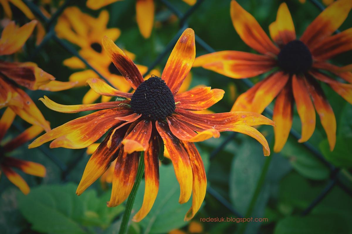 kwiat by joannaredesiuk