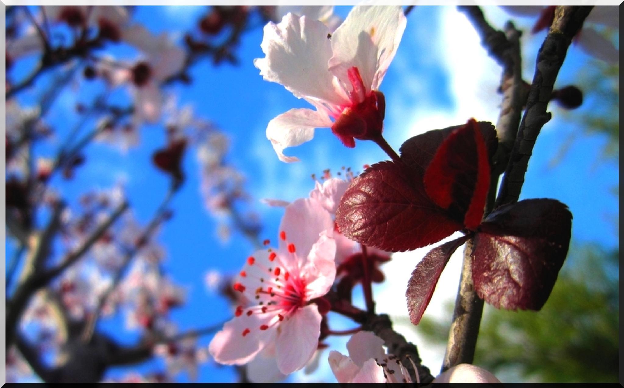 primavera...in arrivo by biafrano1960