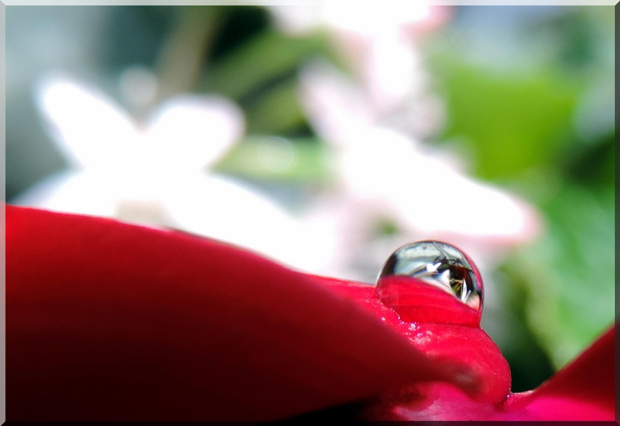 tra i fiori 1 by biafrano1960