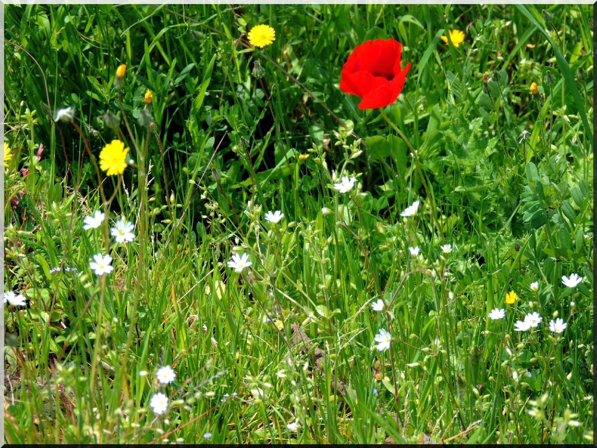 primavera 1 by biafrano1960