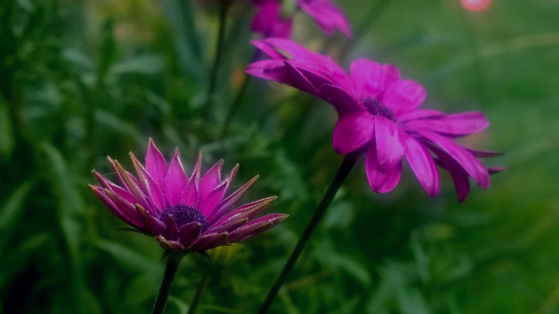 Flowers by gemma smith