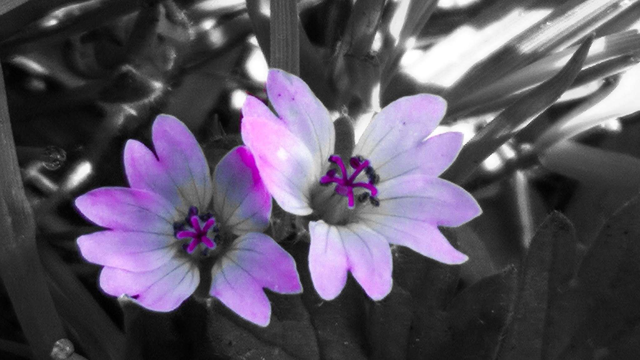 Purple Flowers by gemma smith