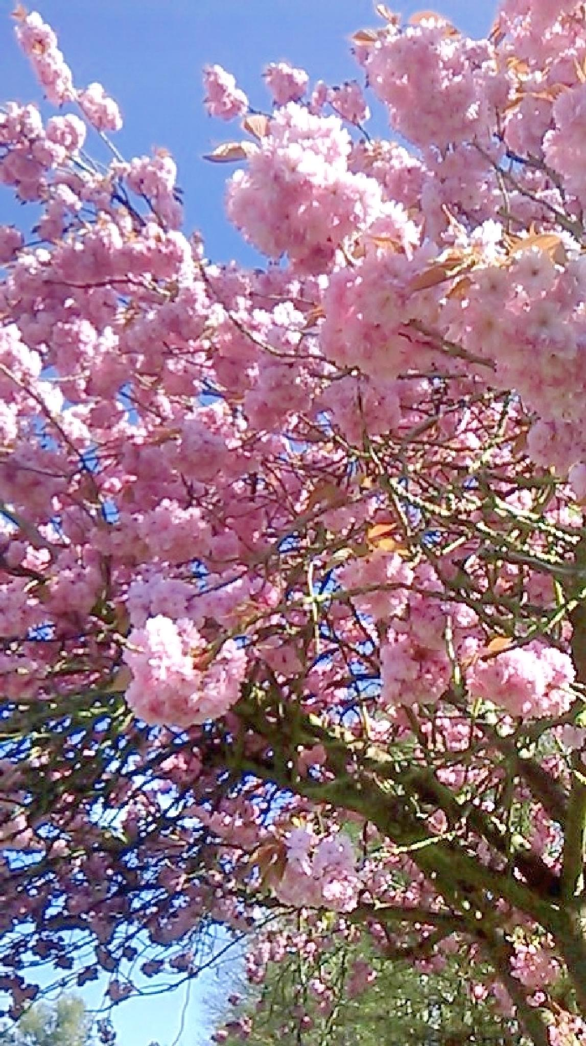Blossoms by gemma smith