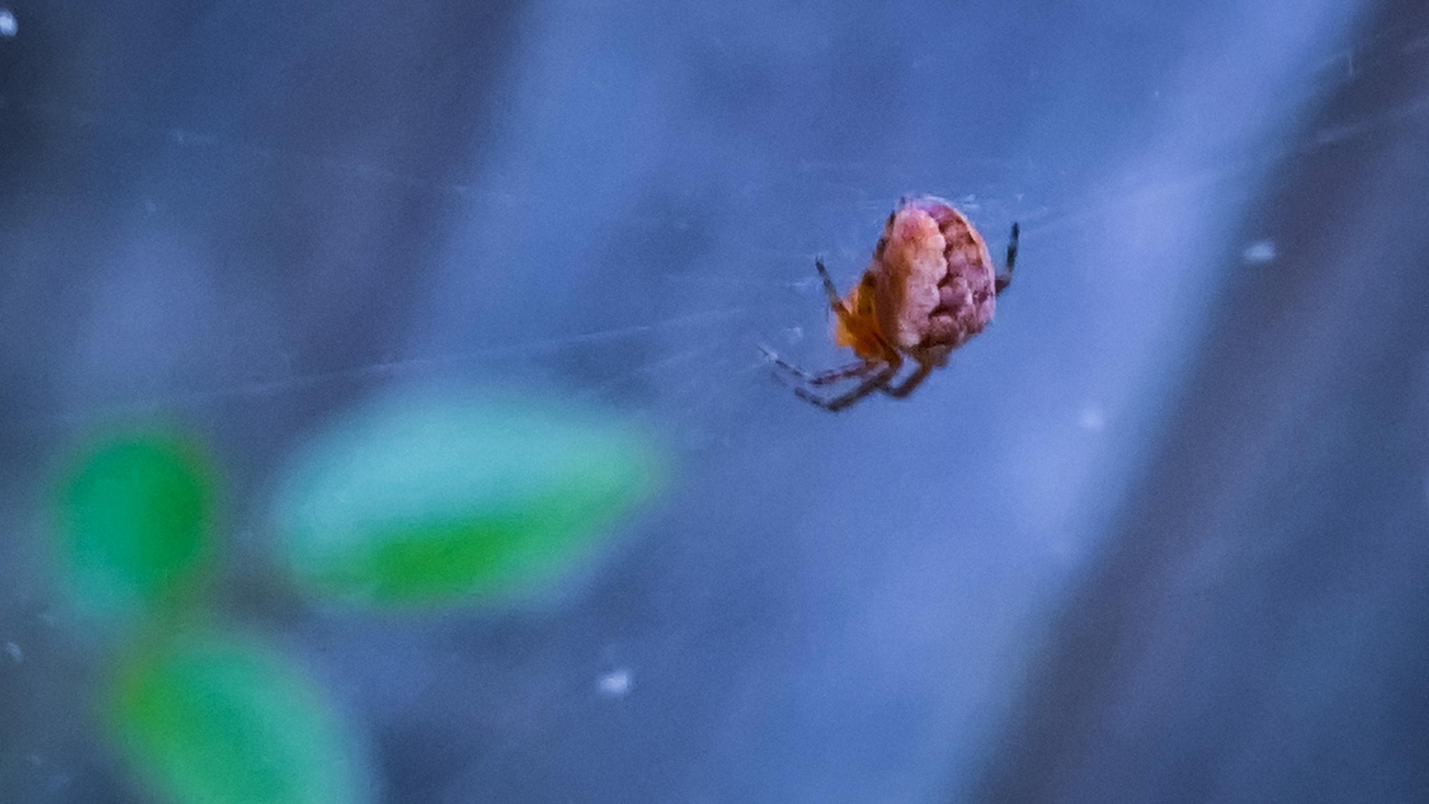 Spider by gemma smith