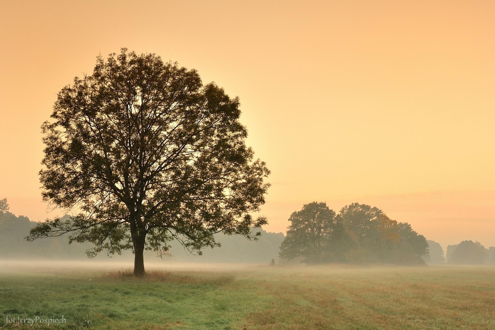 we mgle by Jerzy Pospiech