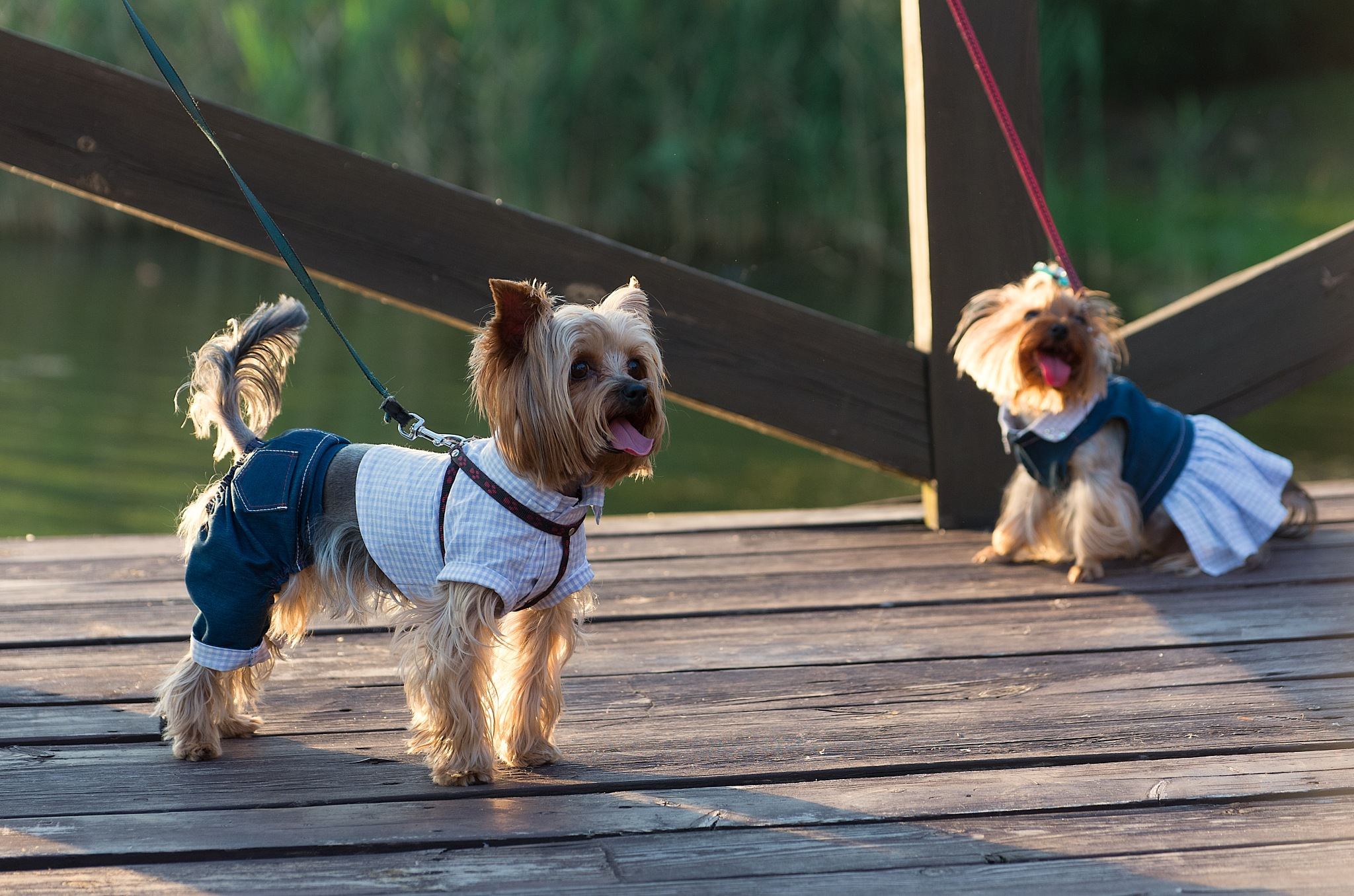 Fashion dogs by ivan.teamen