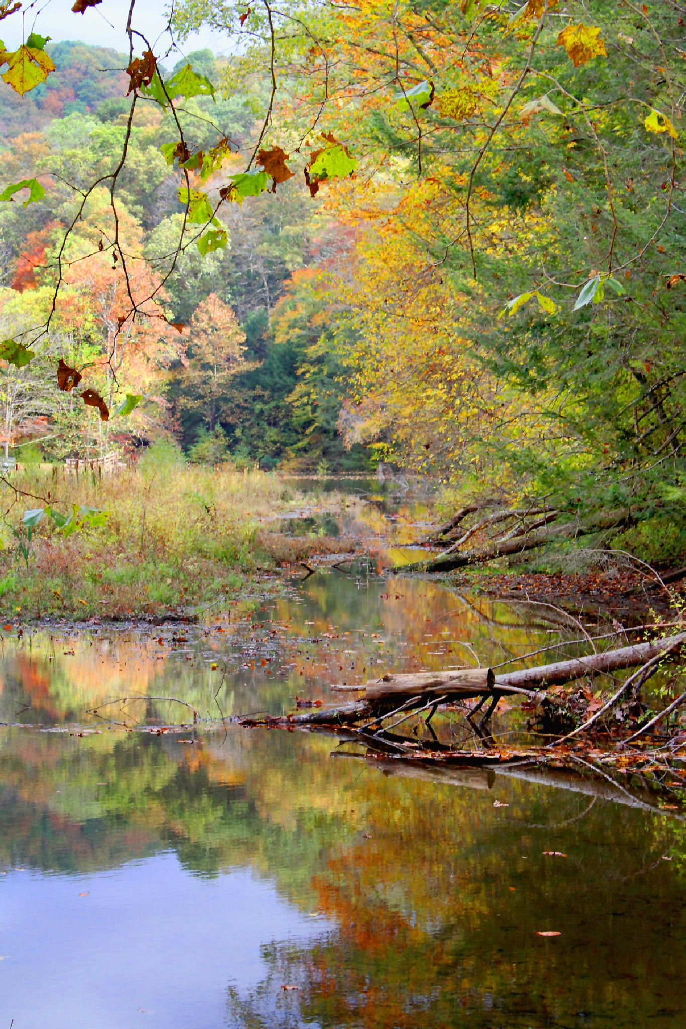 Fall Stream by James Means