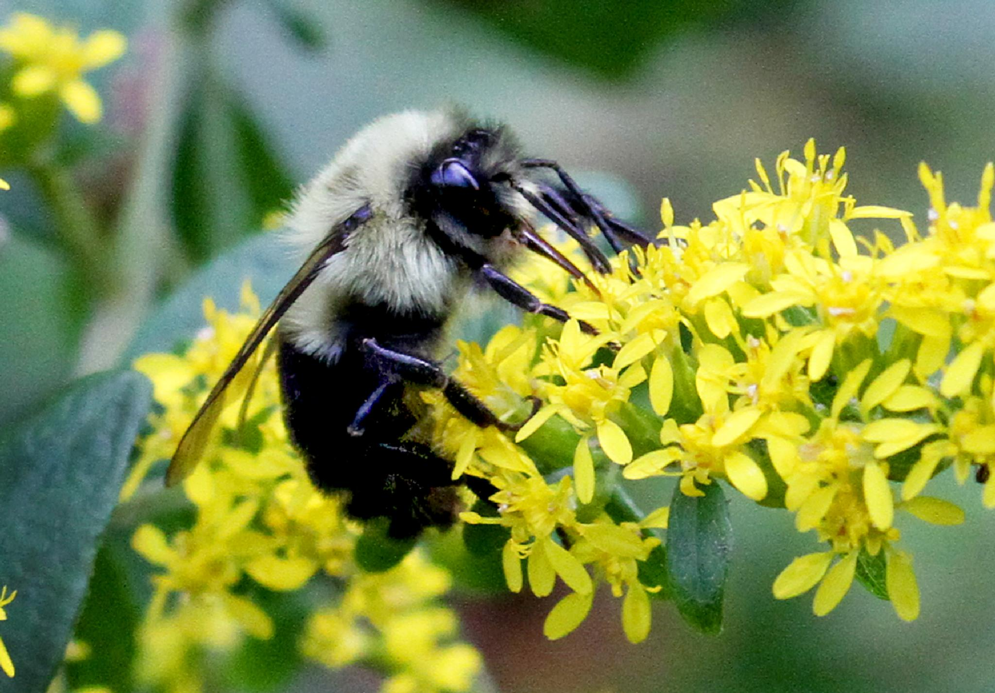 Bumbles by James Means