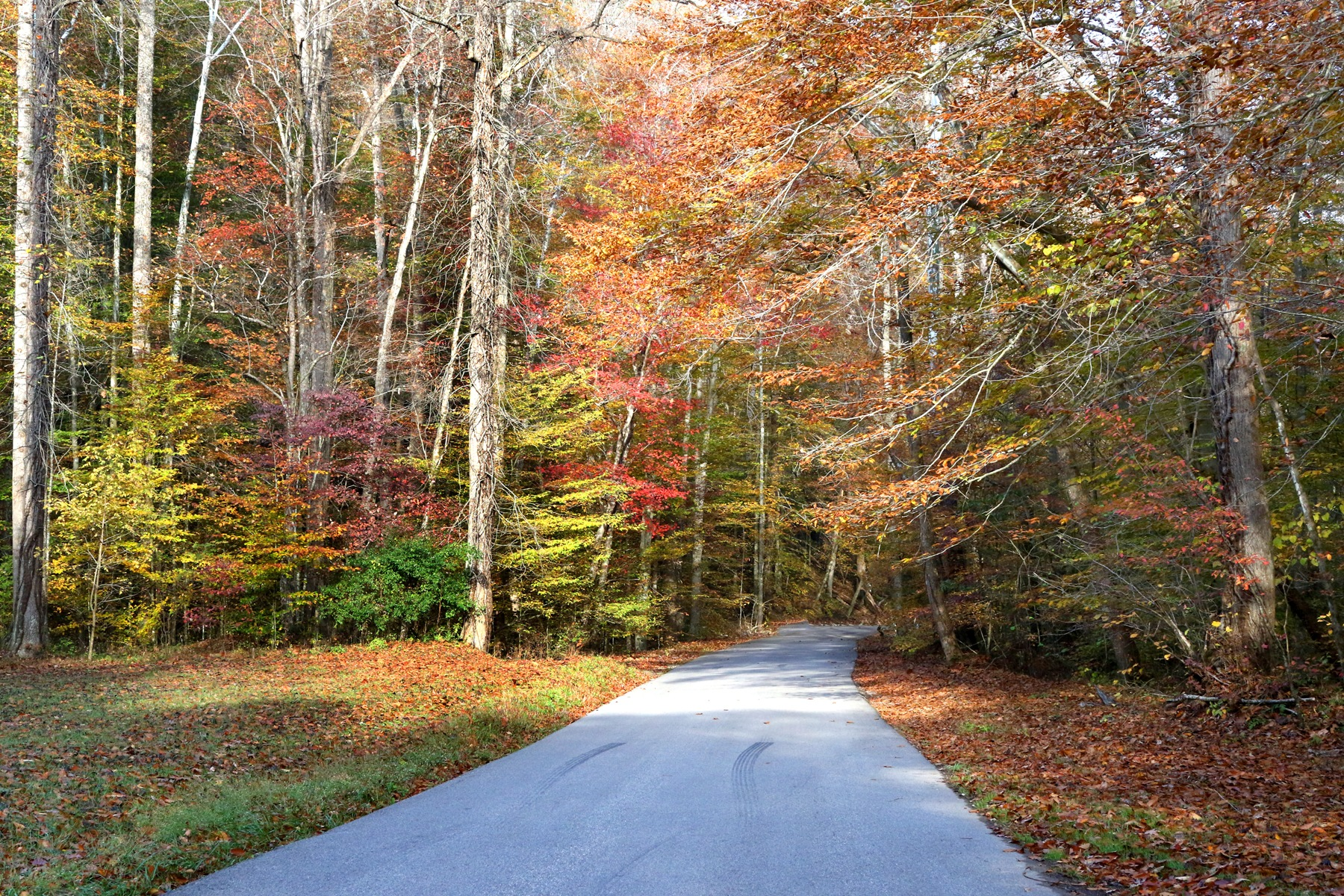 Fall Country Road by James Means