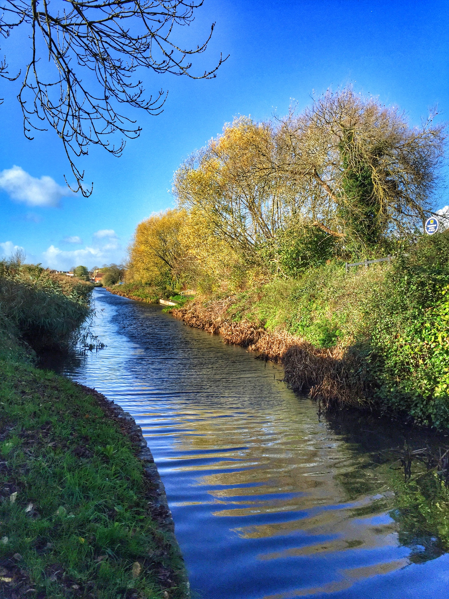 Bridgwater & Taunton Canal  by debi.Moss.3