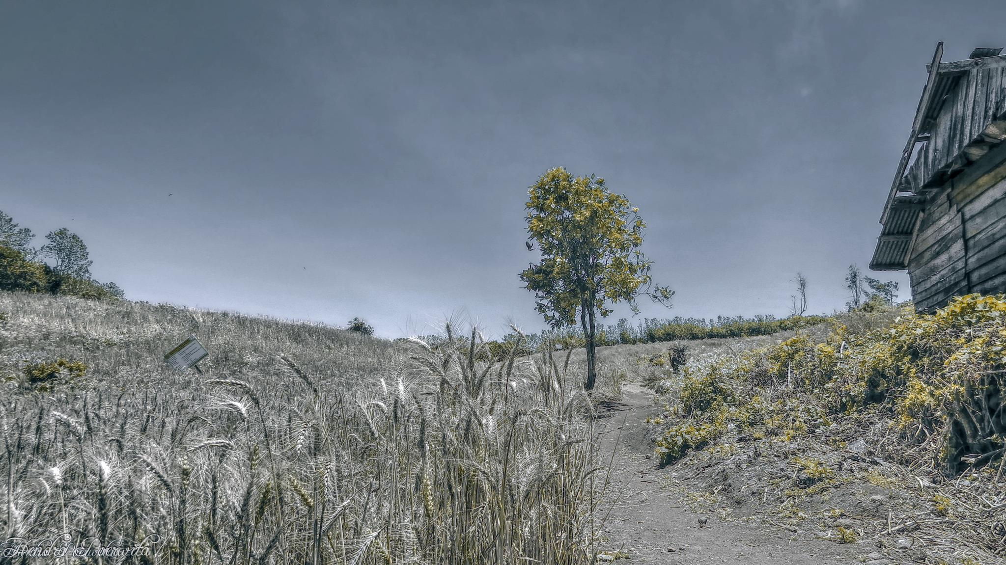 FOOL IN THE HILL III by hendra.poerwita