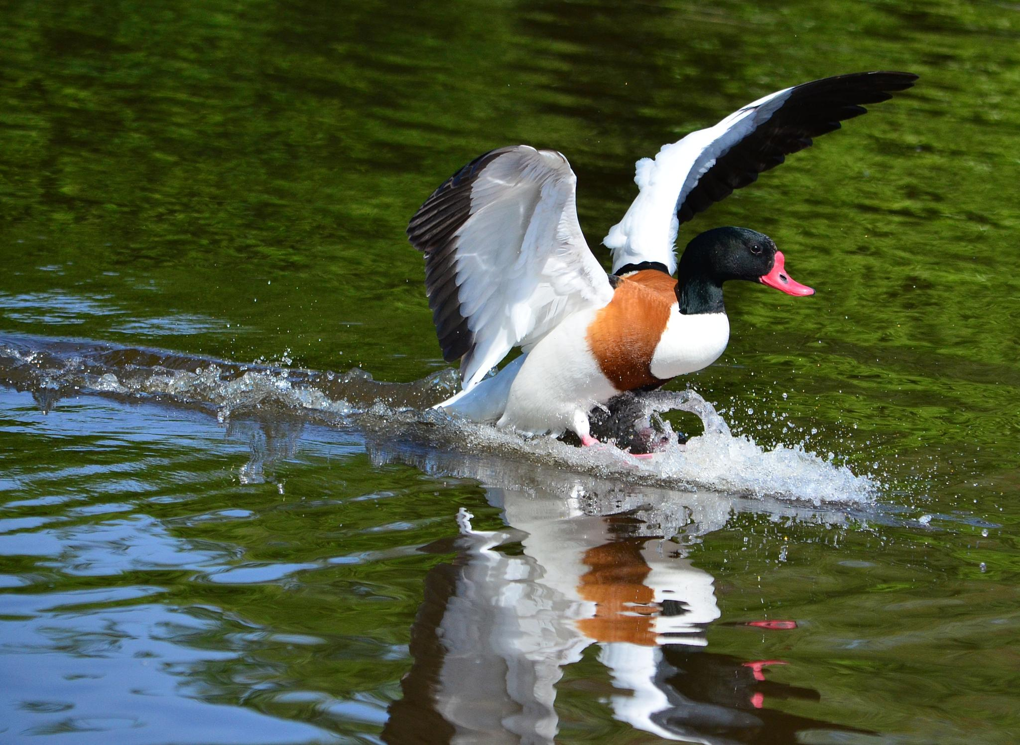 Splash down by ian.hughes.1420