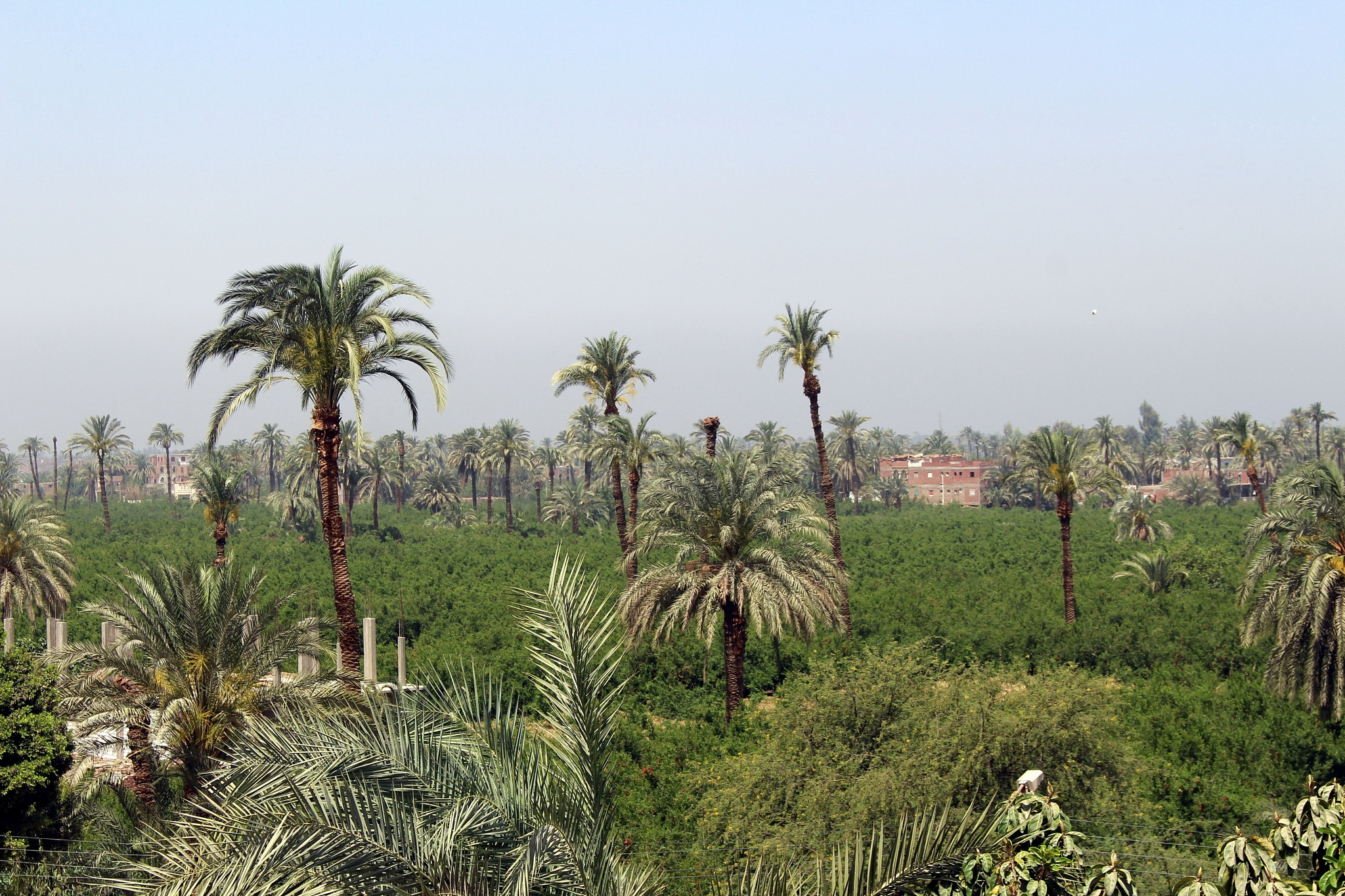 Egyptian Countryside by mo'ness youness
