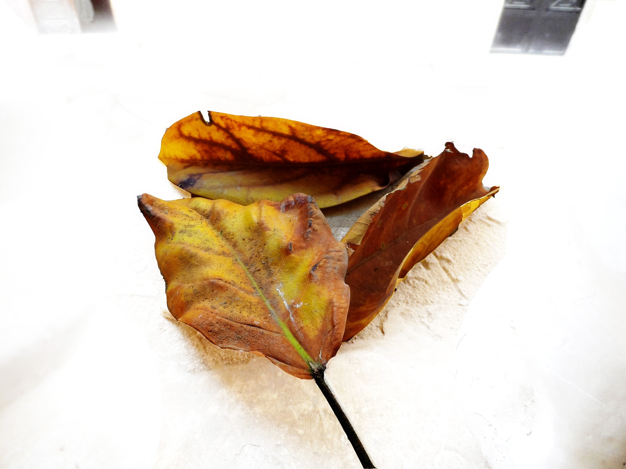 Leaves on the fall 4 by mo'ness youness