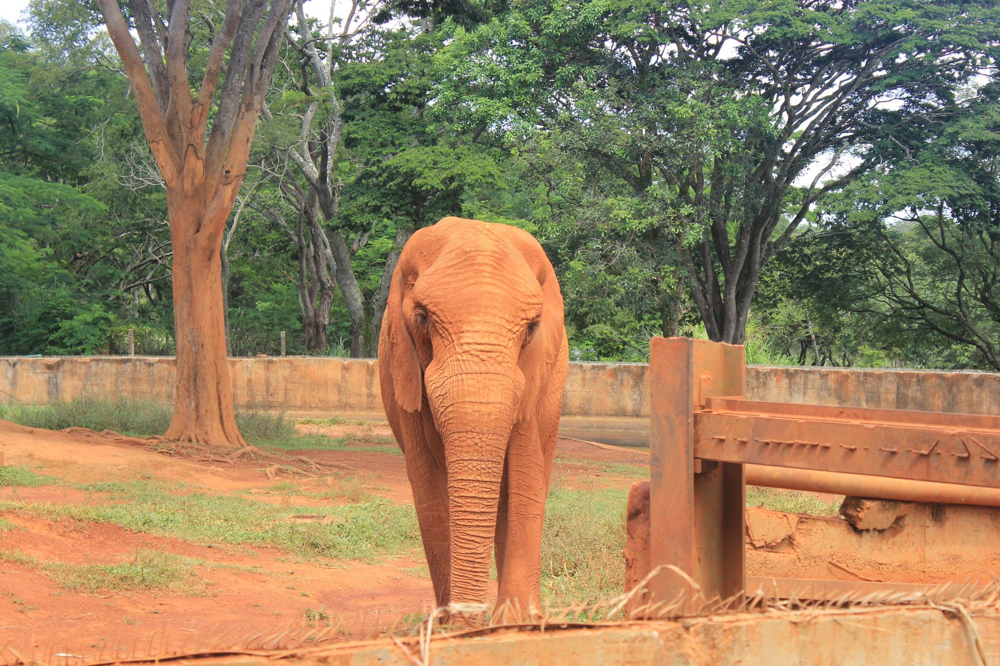elephant by Ricardo Pacheco