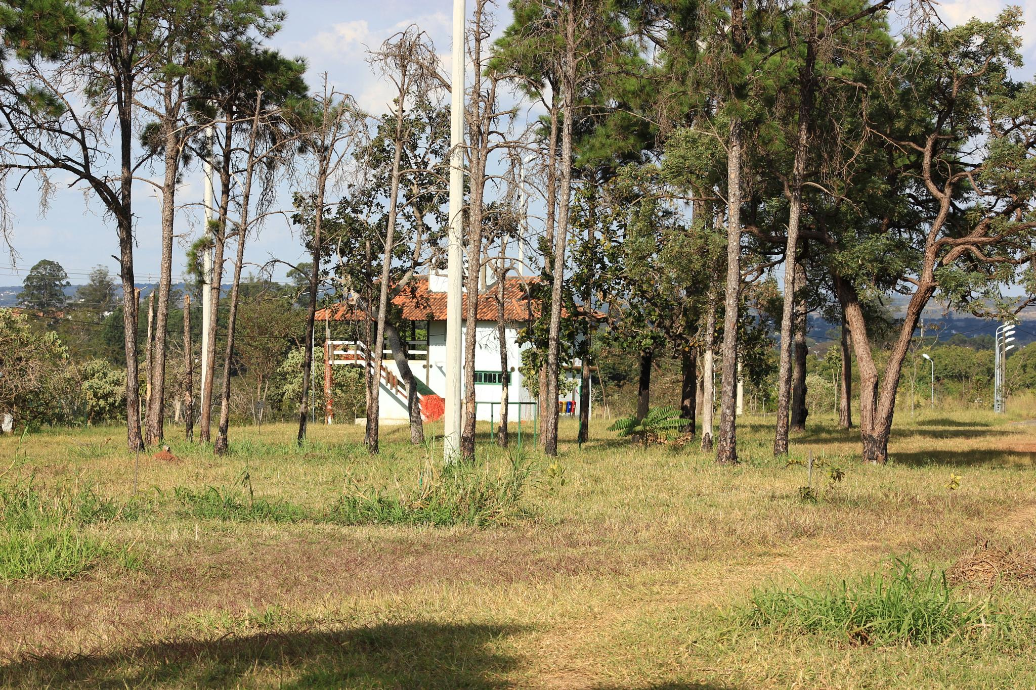 The house on the park by Ricardo Pacheco