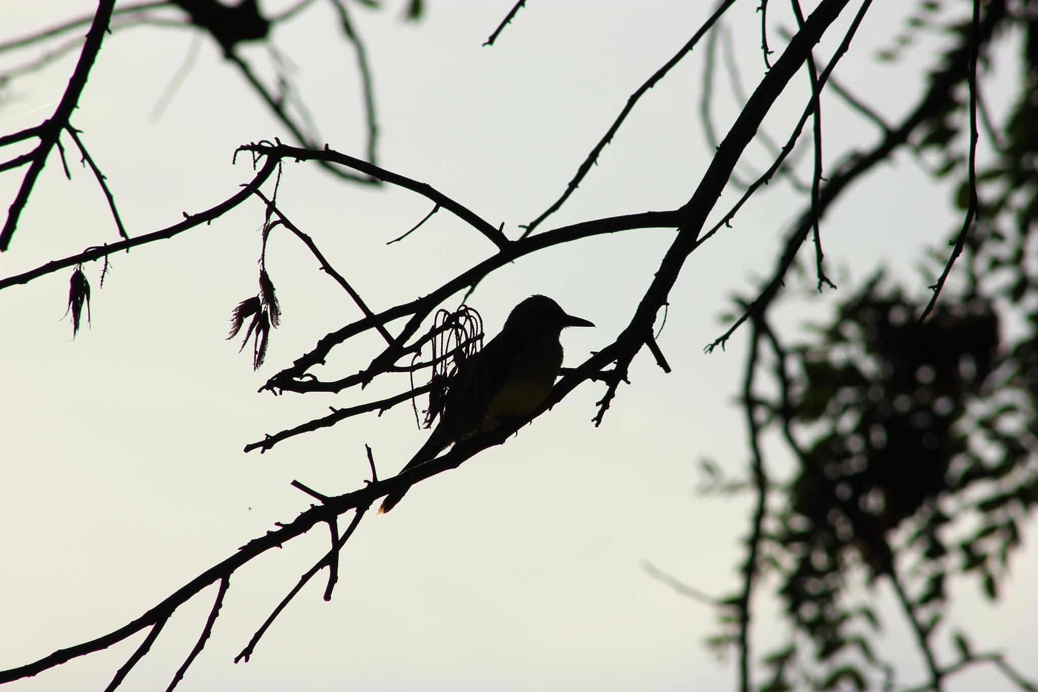 Bird by Ricardo Pacheco