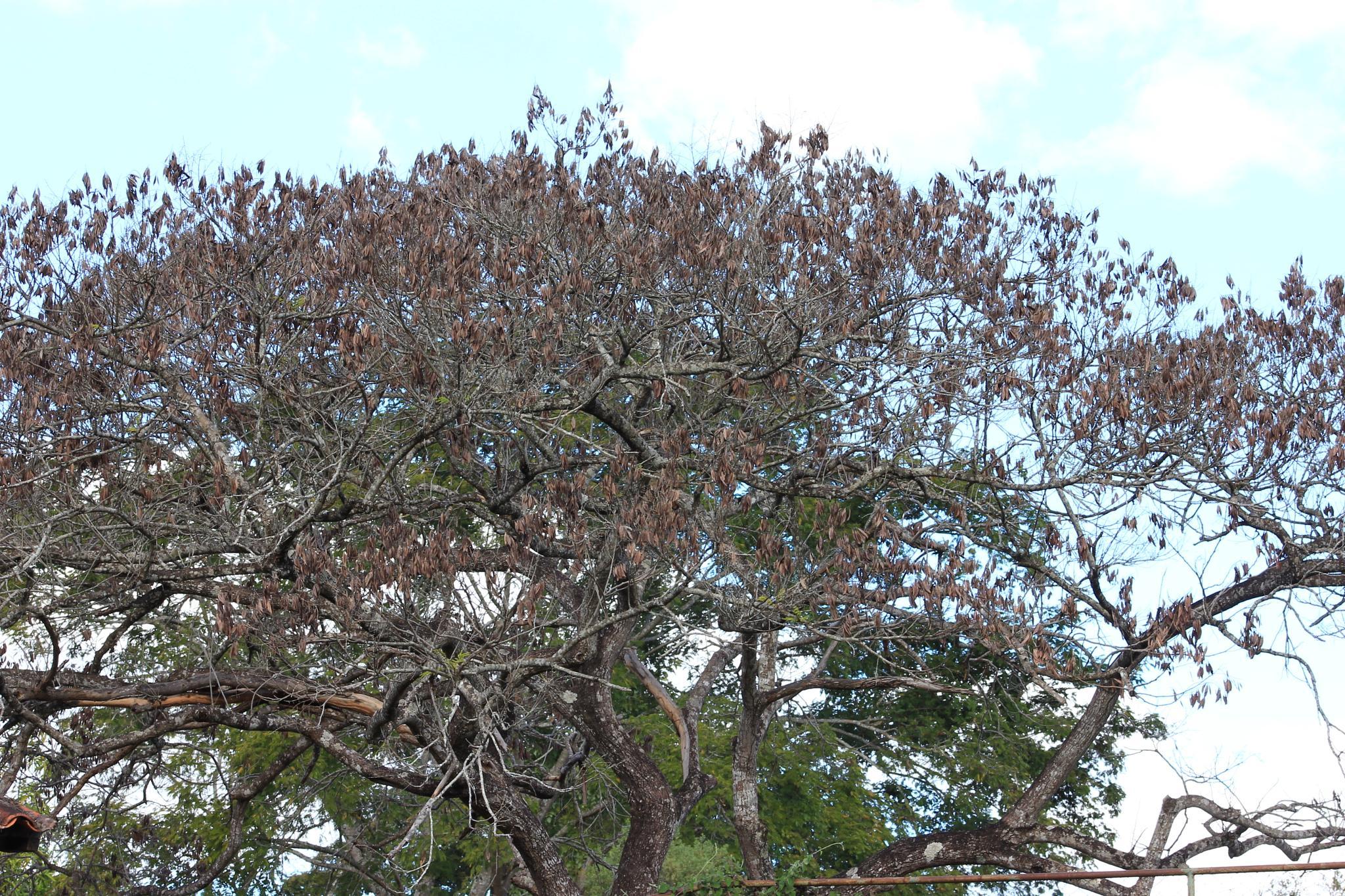 dry trees of the savannah by Ricardo Pacheco
