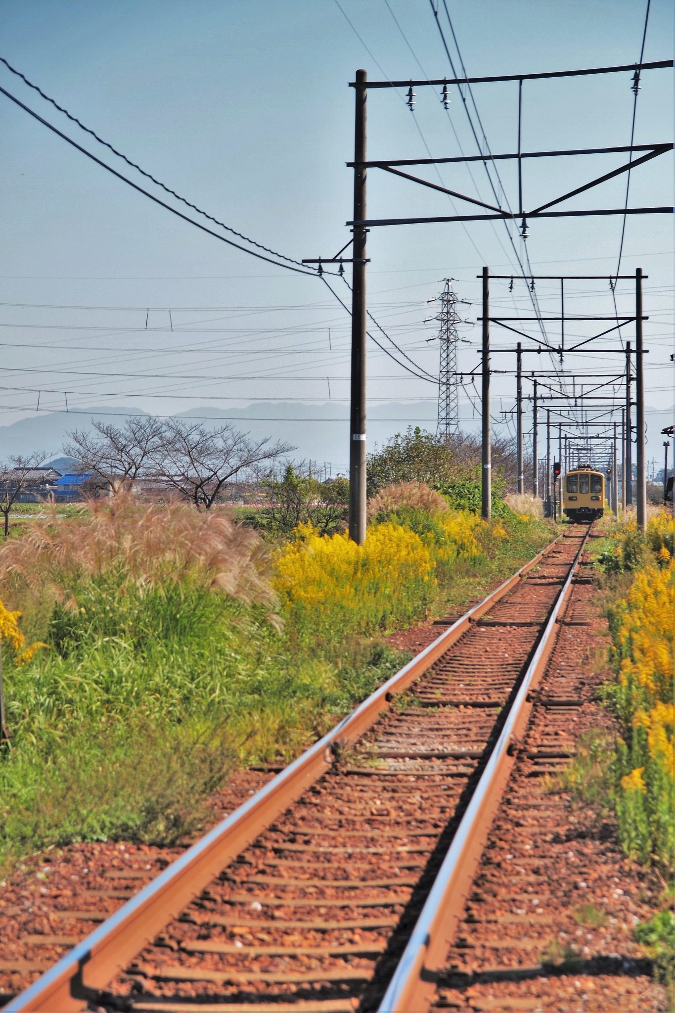 Local line by SANRI