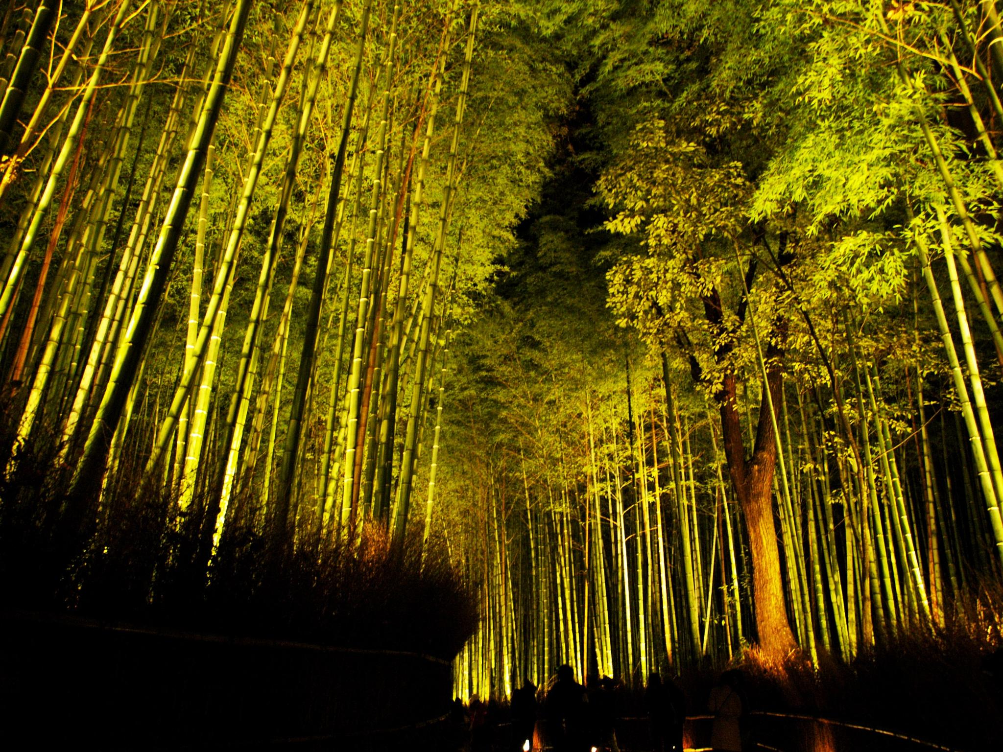 Road of Kyoto Sagano bamboo forest by SANRI