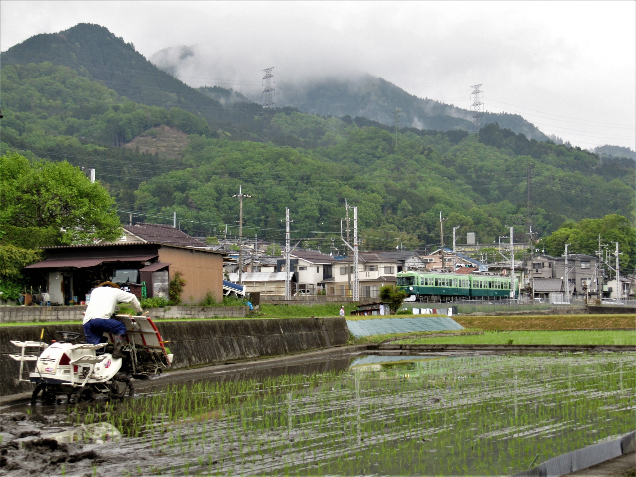 rice planting by SANRI