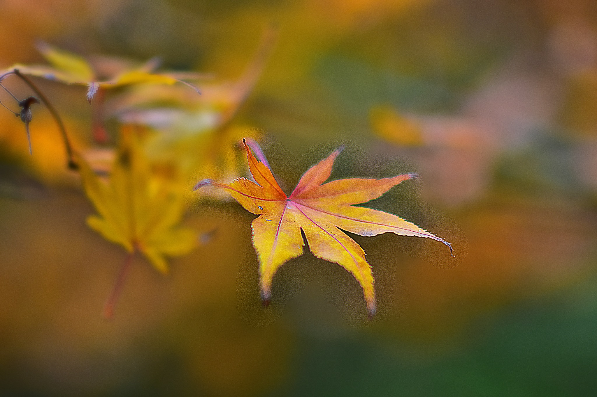 Leaf on A Tree by gregbahder
