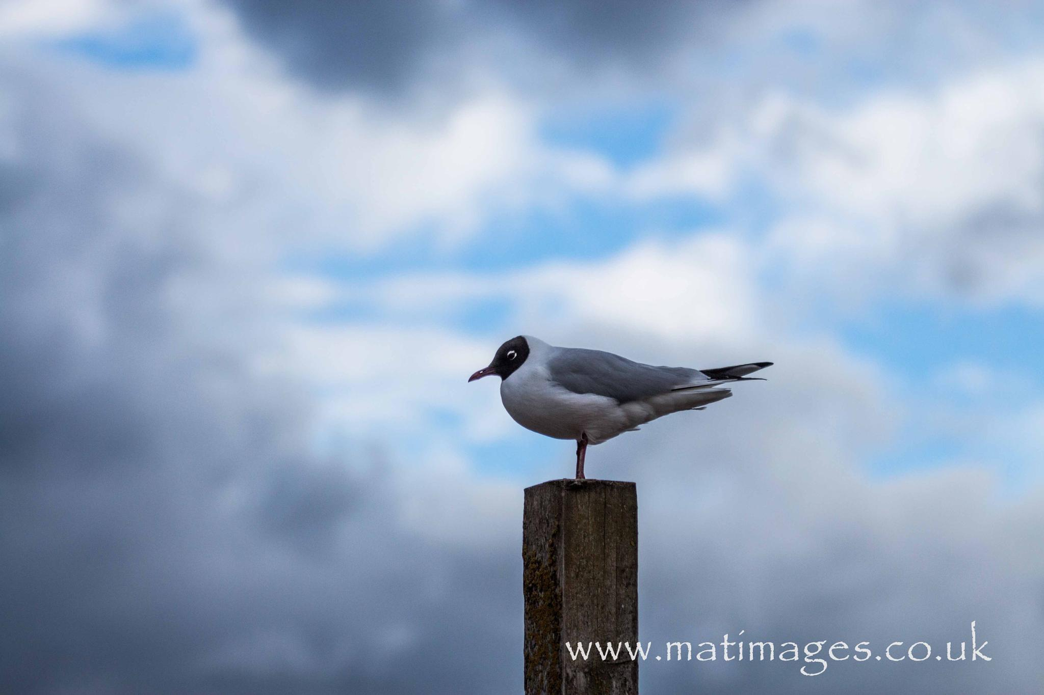 Untitled by Mat Images