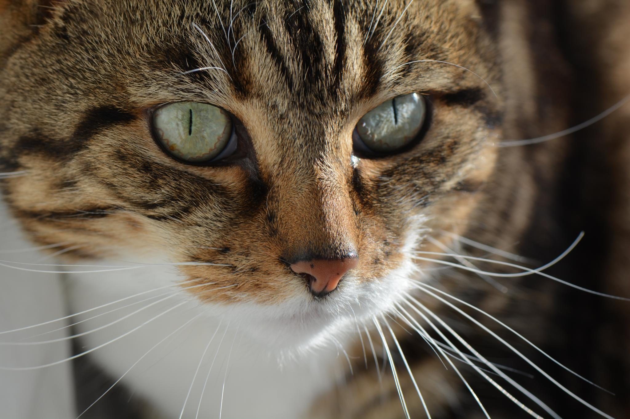 The Cat by paul.tyler.564