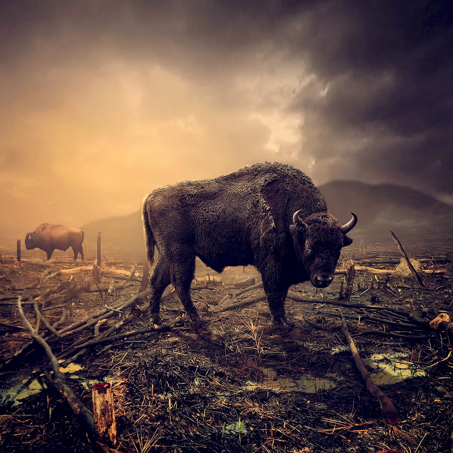 Untitled by Rinaldi Ardiansyah Chaniago