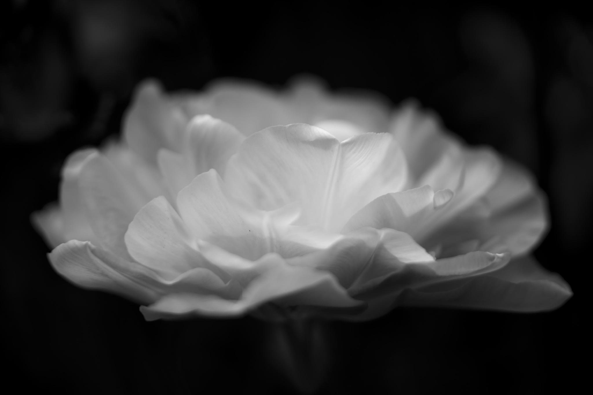 fleur by GabrieleCollini