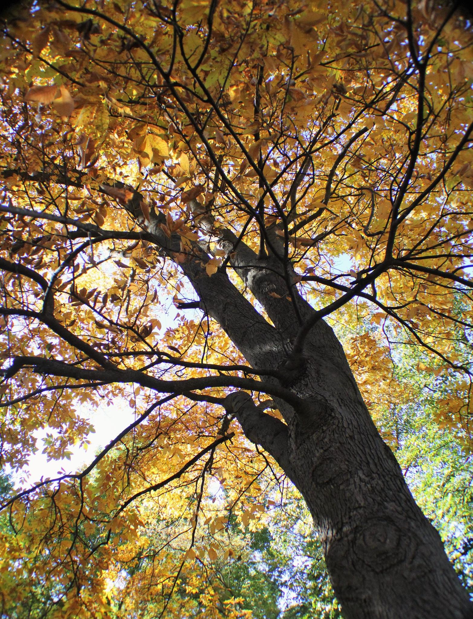 Autumn Height by autumn.acres.1