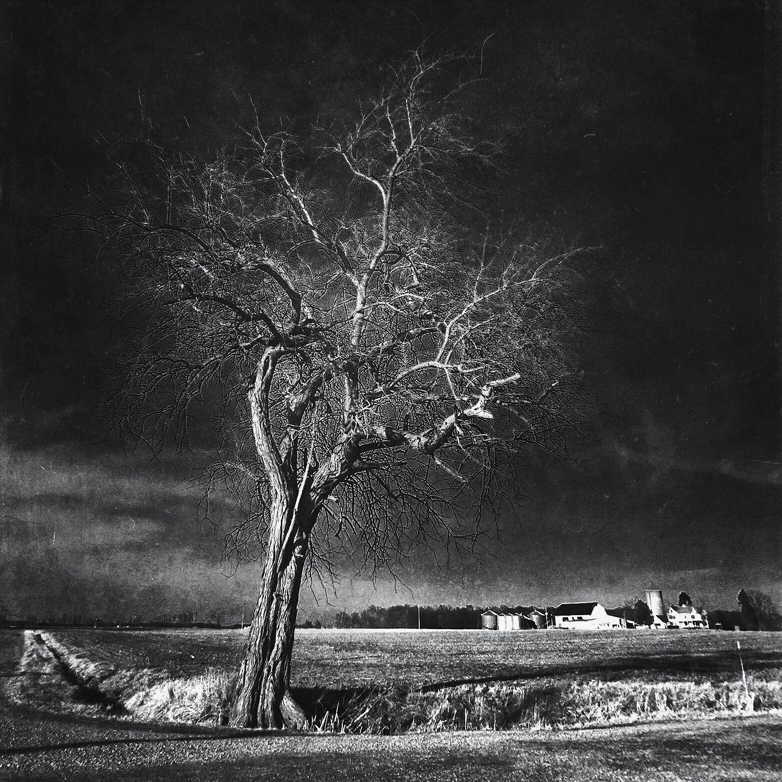 The Twisted Tree by mattdevore