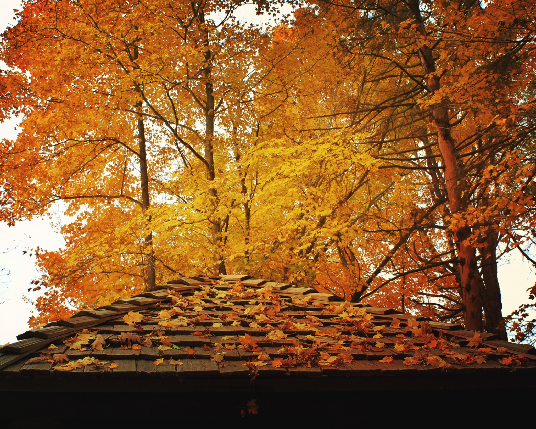 Up on the Housetop by mattdevore