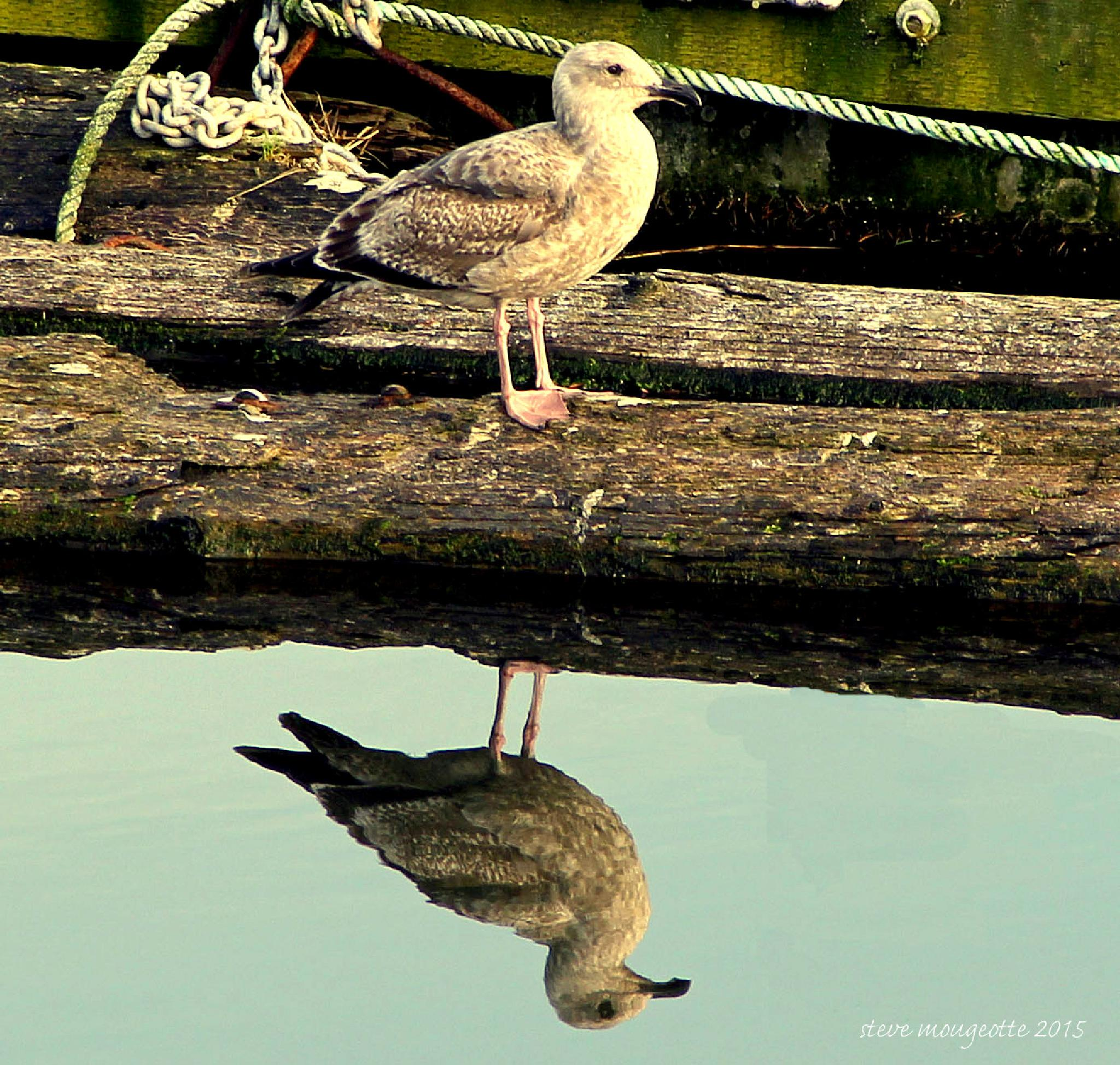 Seagull reflection by lightafterdark61