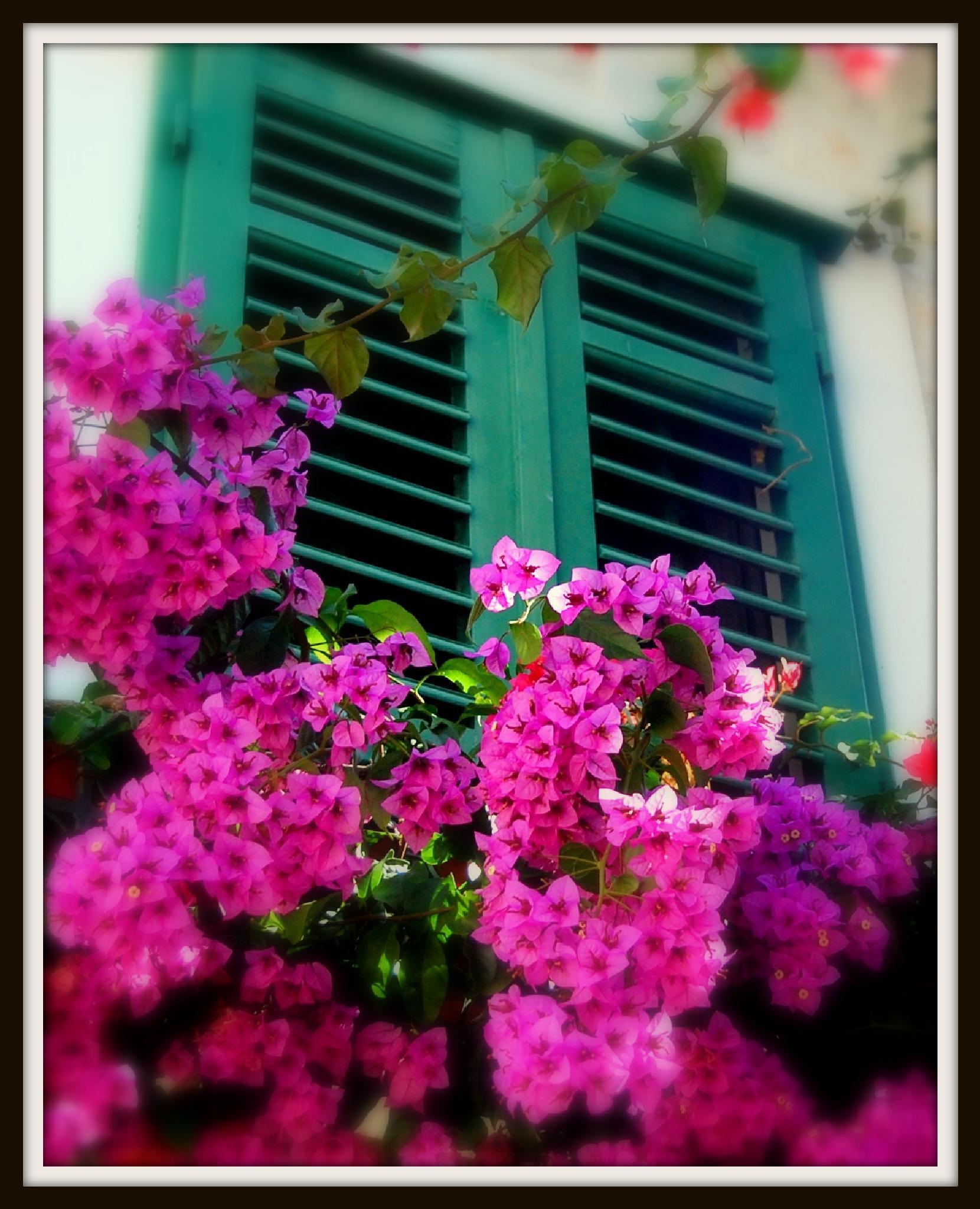Mykonos Flowers by ChristopherMorrison