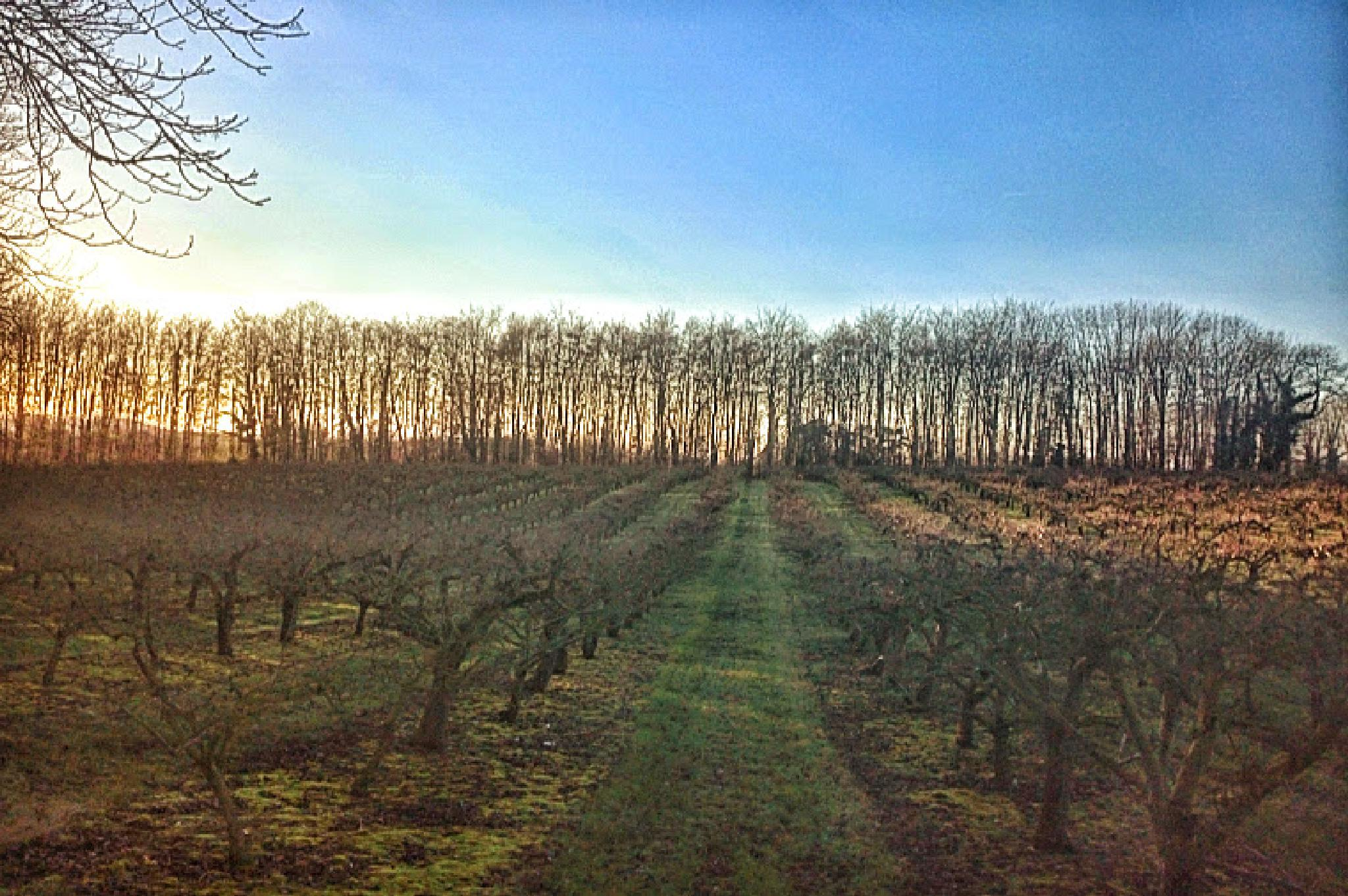 Orchards & Trees by geoff richards