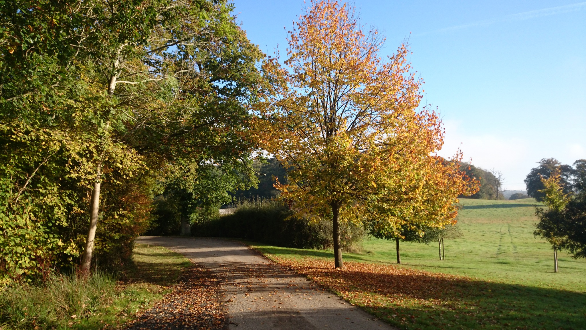 Autumn Drive Number One by geoff richards