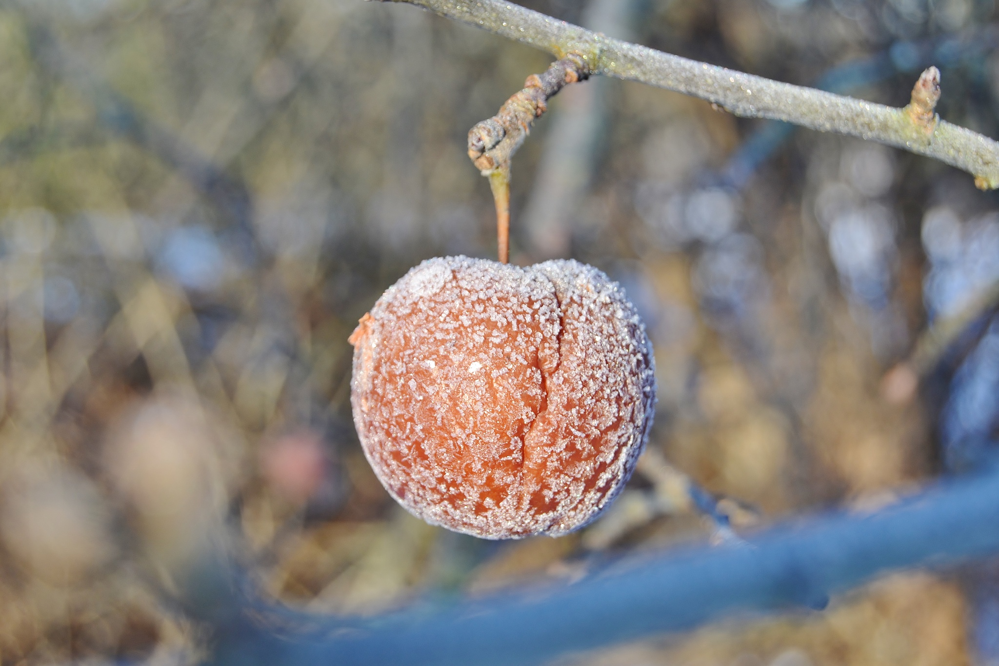 Frozen apple by stefan.andersson3