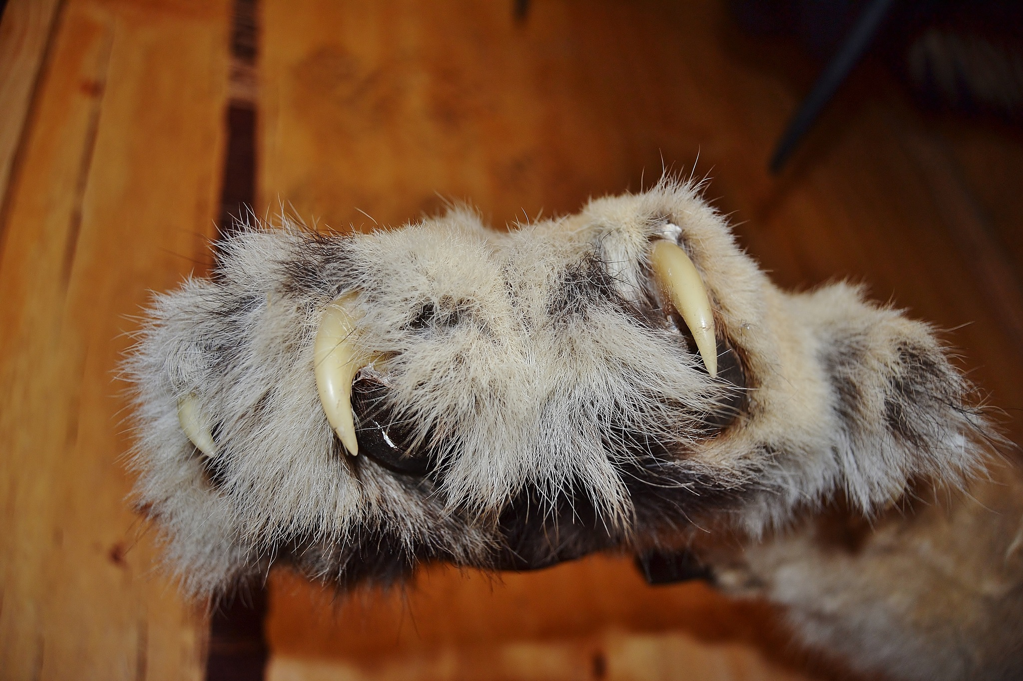 paw of the lion by stefan.andersson3