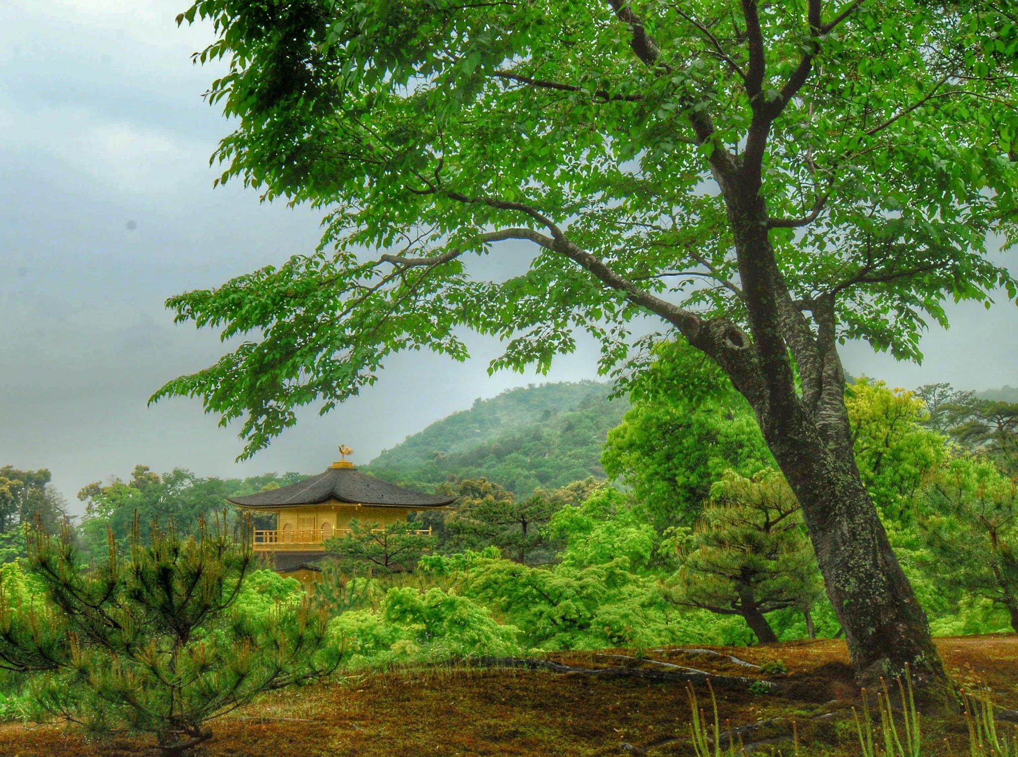 The Golden pavillion by Ming_Bear