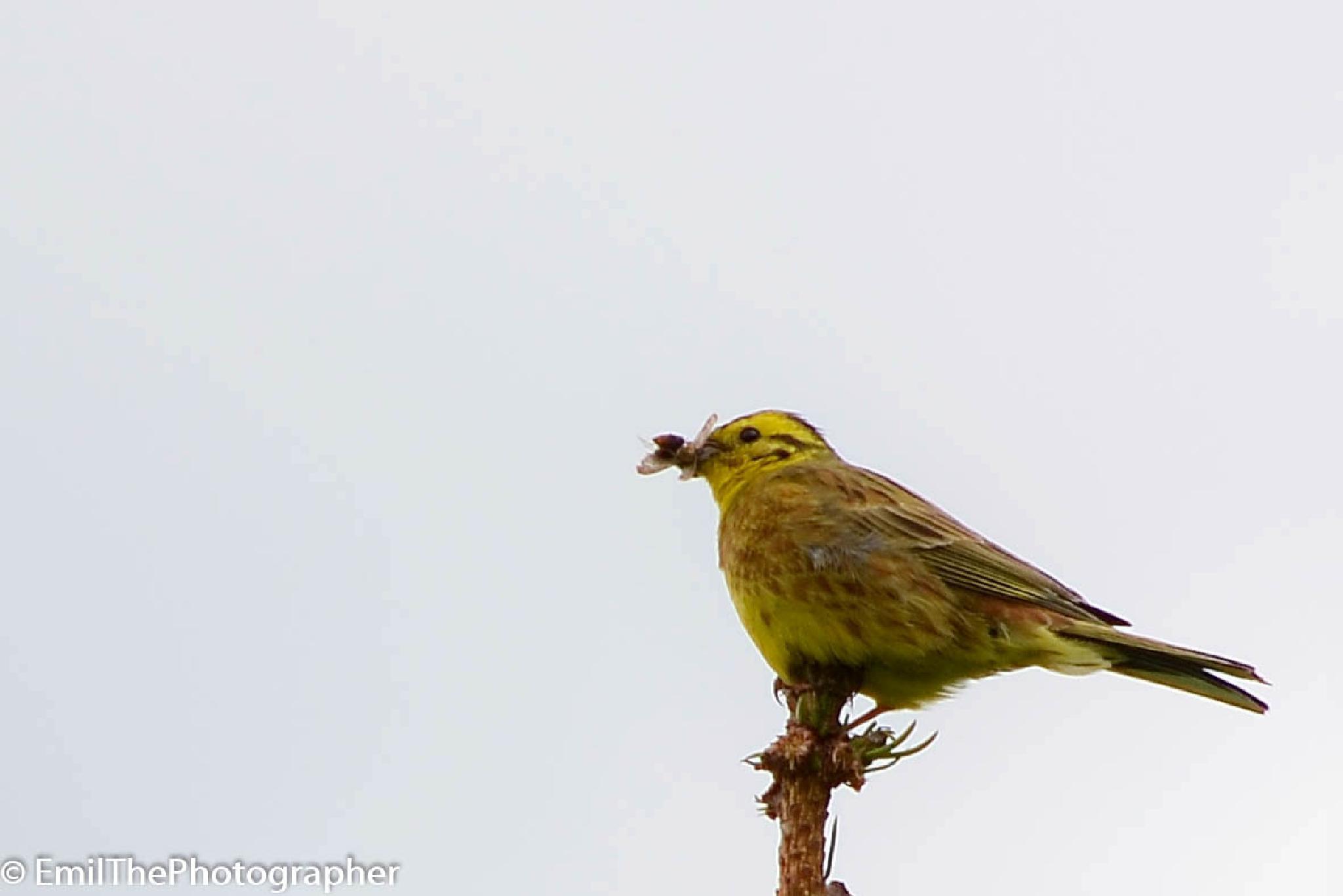 Bird by EmilThePhotographer