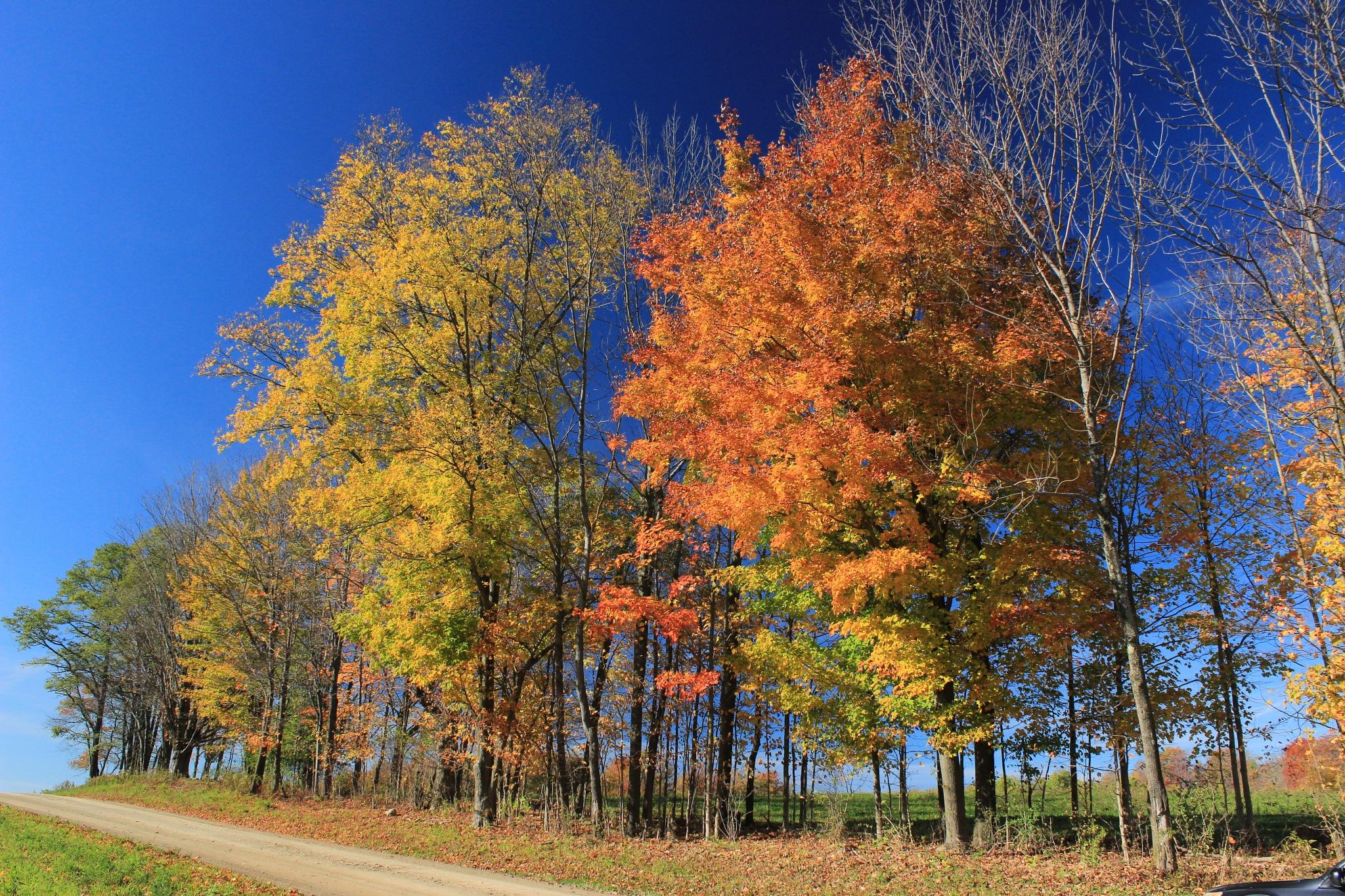 Fall in Sugar Grove by Auggie23