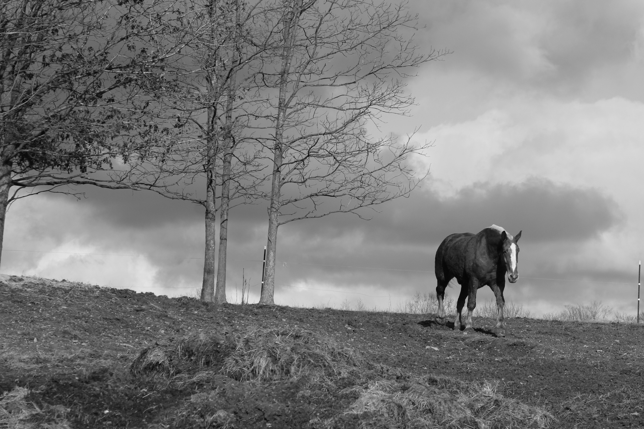 Horse on a Hill by Auggie23