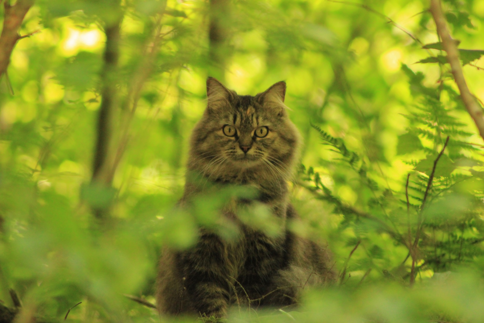 Fluffy Feline Hiding in the Weeds by Auggie23