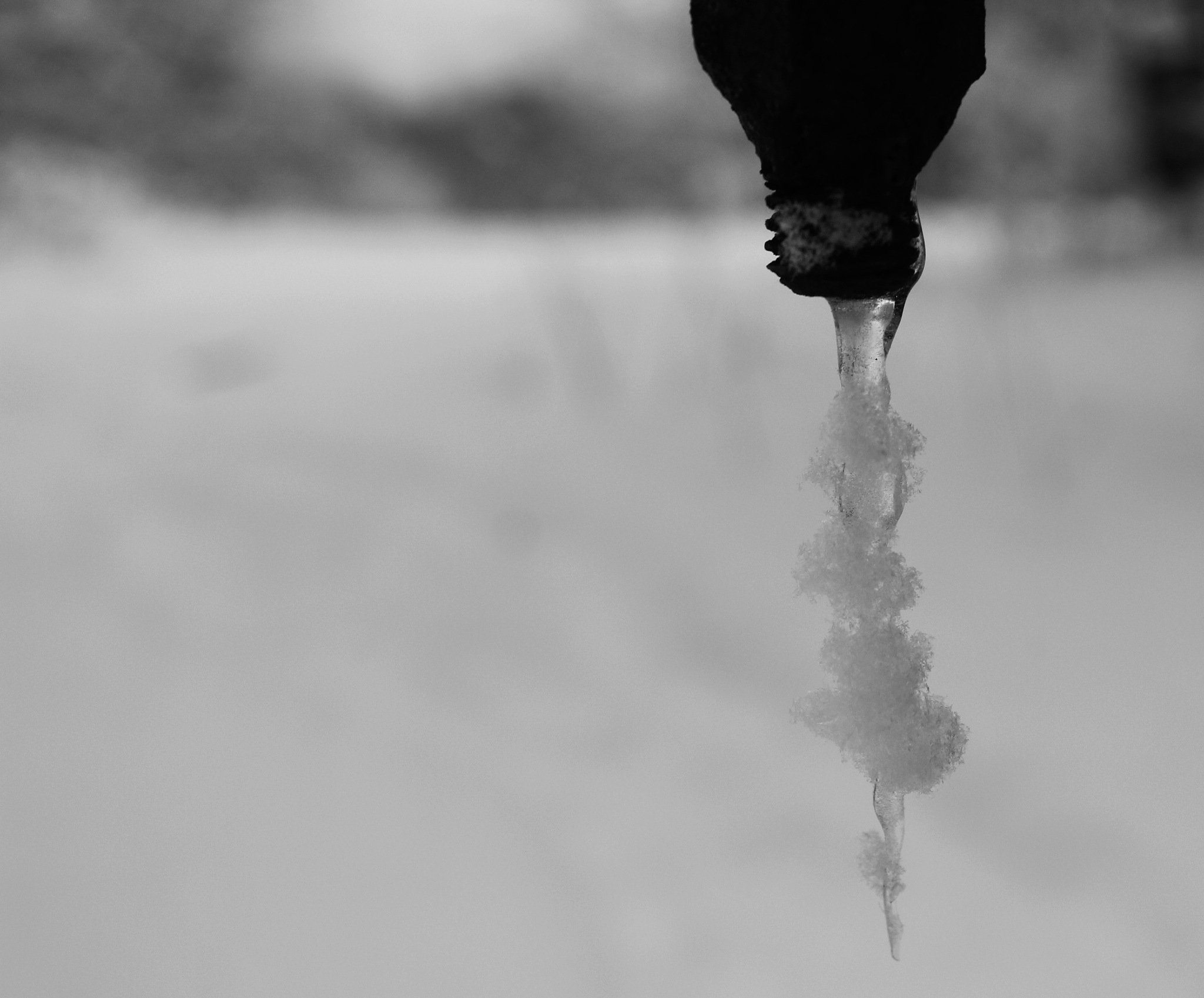 Snowy Icicle by Auggie23