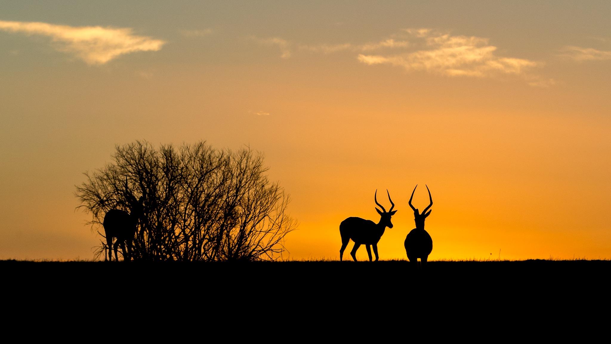 Sunset Kariega by Goeran Wallin