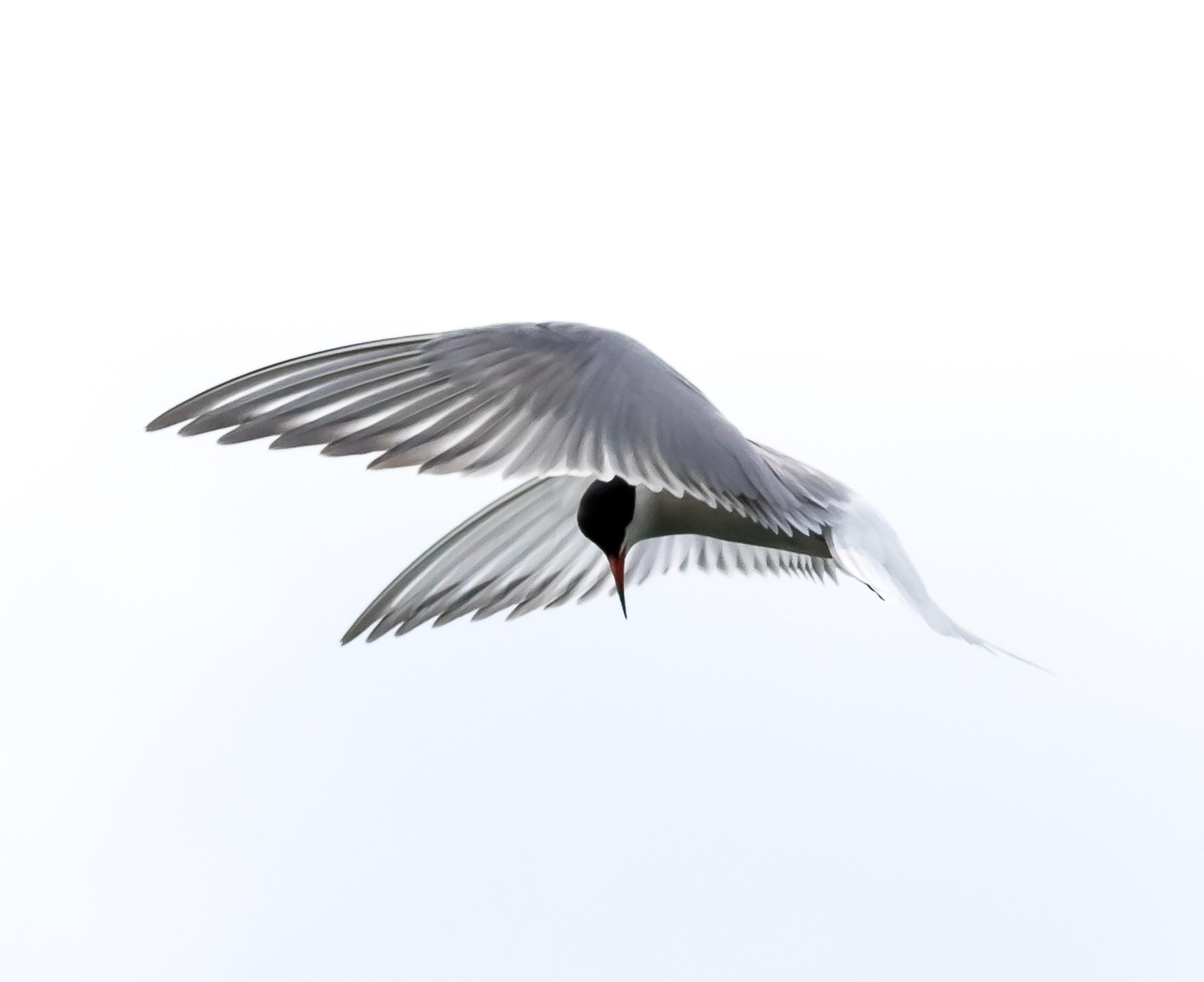 An angel in the sky.... by Goeran Wallin