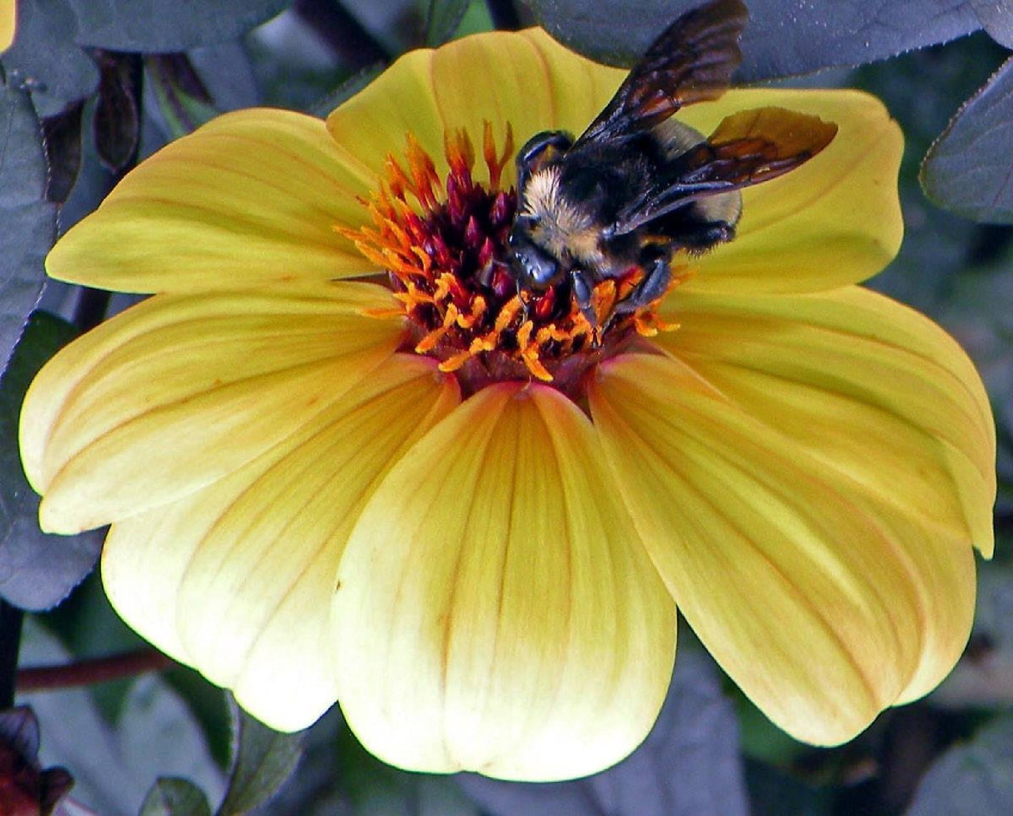 Bee Callaway Gardens by nora.j.jones