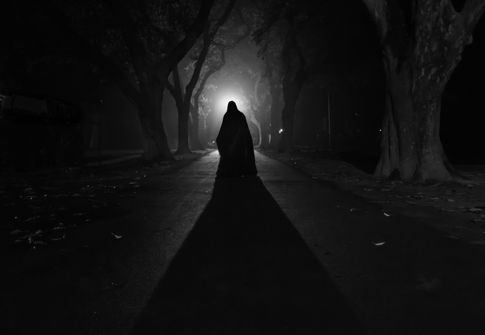 shadow fallowing.. by sayed wasi haider