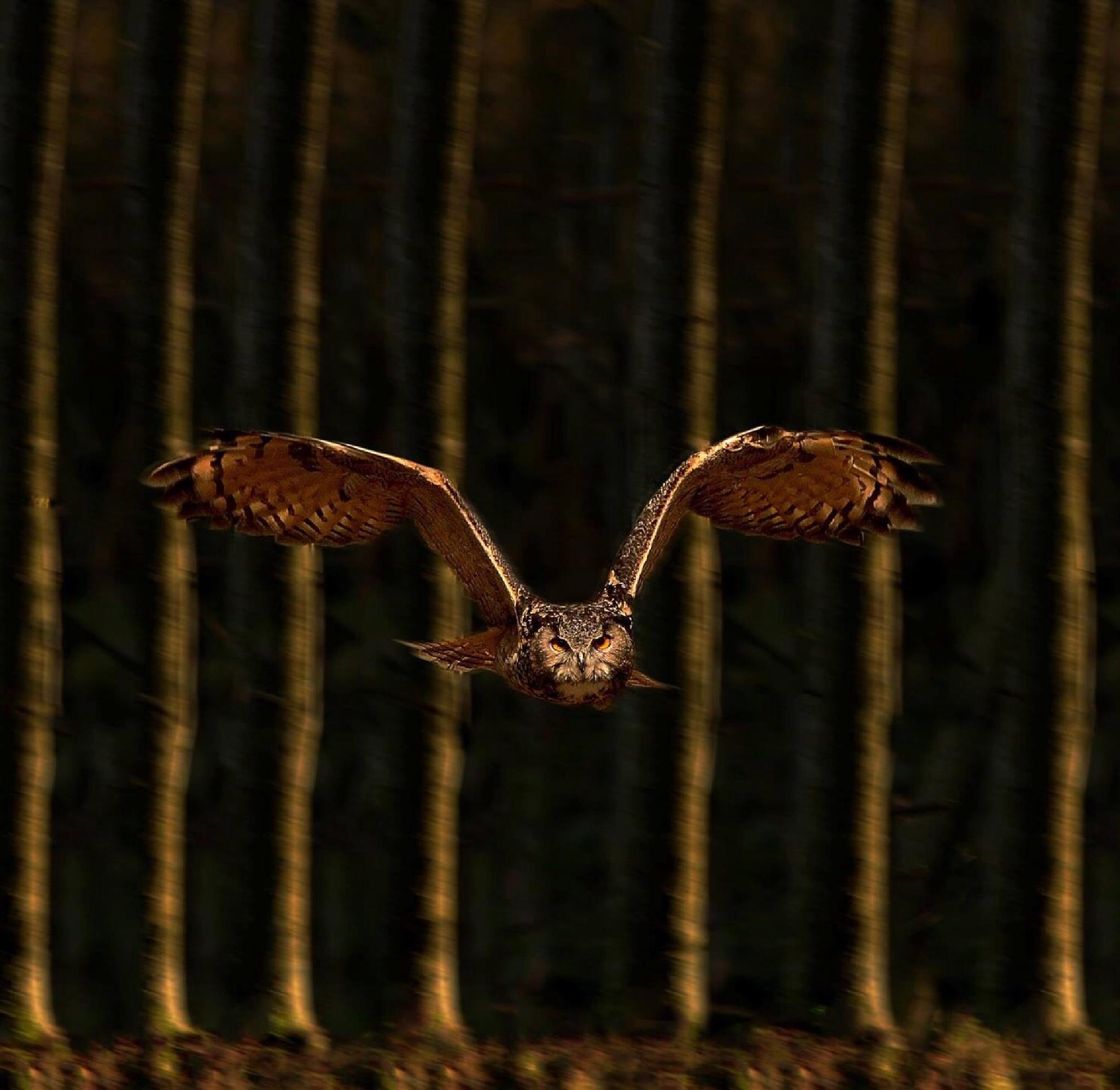 Eagle Owl by Mark Mcelligott